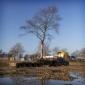 Afbeelding van Nieuwe locatie voor Tamme kastanje in Bedrijvenpark Ambachtsezoom