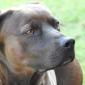 Afbeelding van Prachtige hond Buddy