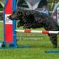 Afbeelding van Samen agility doen en leuk dat Akira het vind! :)