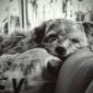 Afbeelding van Relax.......