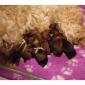 Afbeelding van C nest pups