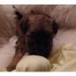 Afbeelding van pups C nest