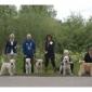 Afbeelding van Pups / Nesten