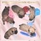 Afbeelding van pups A nest