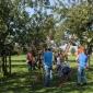 Afbeelding van De Peerdegaerdt organiseert Plukfestijn van 16 tot en met 18 september