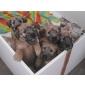 Afbeelding van pups B nest