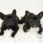 Afbeelding van Tygo en Nala