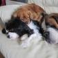 Afbeelding van Samen slapen, gezellig.