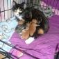 Afbeelding van Opgevangen poes Molly met haar 5 mooie kleintjes.. Voor altijd mijn huisdier van