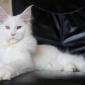 Afbeelding van Mijn witte droom Pixi ..... 6 maanden