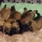Afbeelding van pups D nest