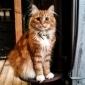 Afbeelding van Loki de kat, houd van poseren en om vliegen te vangen in zijn vrije tijd