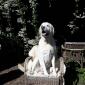 Afbeelding van Floo zit graag heerlijk in het zonnetje!