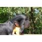 Afbeelding van Dinsdag 22 mei: Animal assisted activities