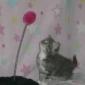Afbeelding van nieuwsgierige kitten Jones...