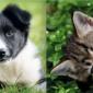 Afbeelding van Opleiding voor bewuste honden- en kattenfokkers