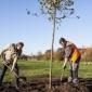 Afbeelding van Meer dan 250 nieuwe bomen voor Ambacht
